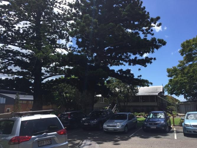 Hoop Pines at St Paul's Anglican School